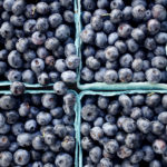 Blueberries and a Look at Fruit